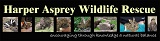 Harper Asprey Wildlife Rescue